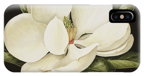 Bloom iPhone Case - Magnolia Grandiflora by Jenny Barron