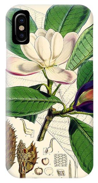 Horticulture iPhone Case - Magnolia Hodgsonii by Joseph Dalton Hooker