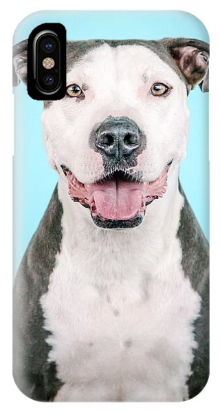 Pitbull iPhone Case - Maila by Pit Bull Headshots by Headshots Melrose