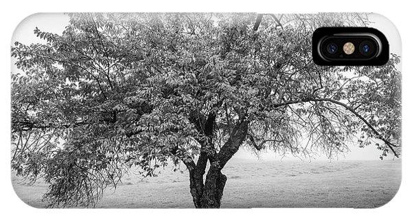 Maine Apple Tree In Fog IPhone Case
