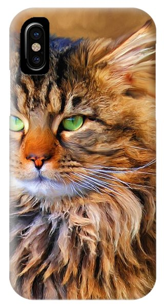 Maine Coon Cat IPhone Case