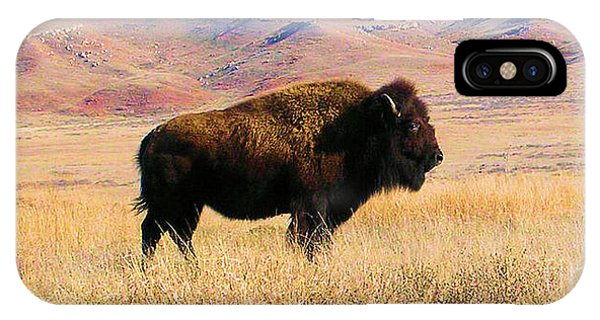Majestic Buffalo In Kansas IPhone Case