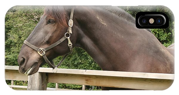 Majestic Horse  IPhone Case