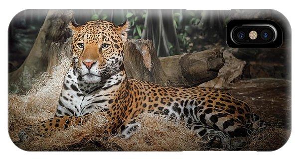 Leopard iPhone Case - Majestic Leopard by Scott Norris