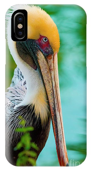 Majestic Pelican 48 IPhone Case