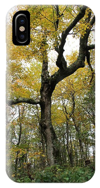 Majestic Tree IPhone Case