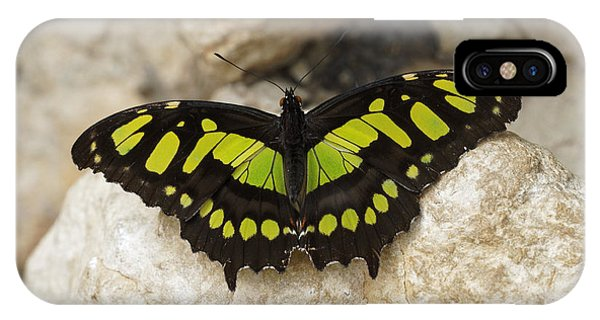 IPhone Case featuring the photograph Malachite Butterfly - Siproeta Stelenes by Paul Gulliver