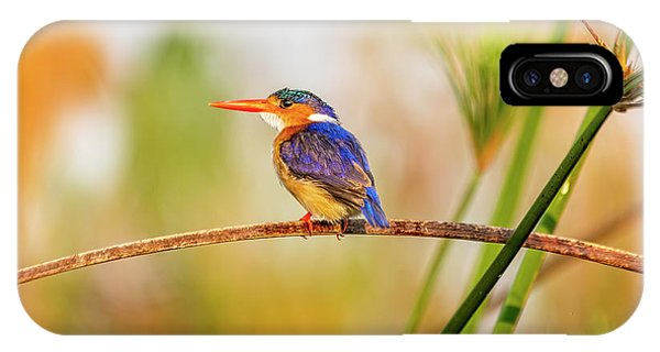 Malachite Kingfisher Hunting IPhone Case
