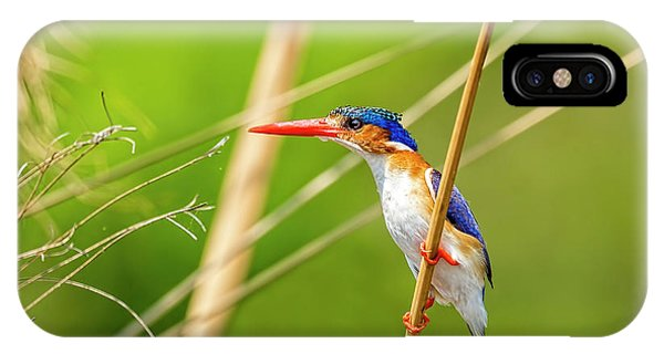 Malalchite Kingfisher IPhone Case