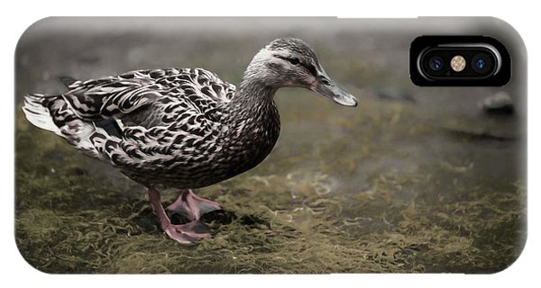 Malard,duckling IPhone Case