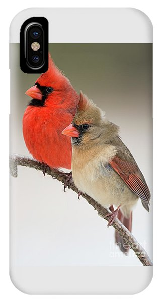 Male And Female Northern Cardinals On Pine Branch IPhone Case