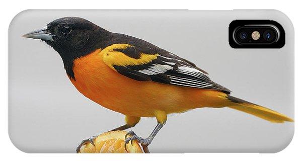 Male Baltimore Oriole IPhone Case