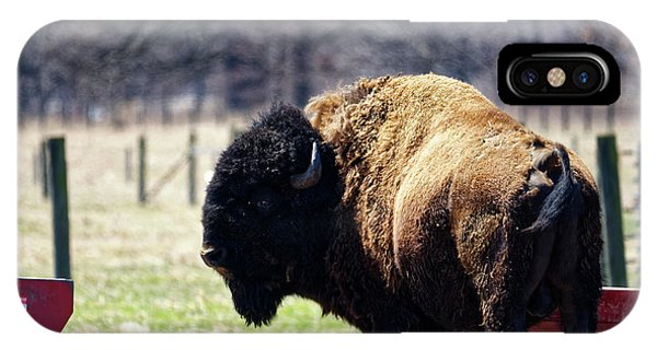 Male Bison IPhone Case