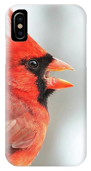 Male Cardinal In Profile IPhone Case