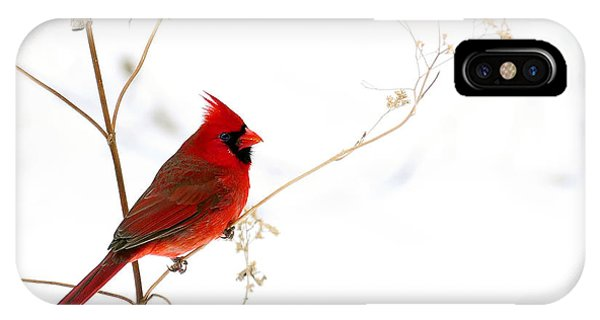 Male Cardinal Posing In The Snow IPhone Case