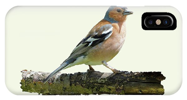Male Chaffinch, Cream Background IPhone Case