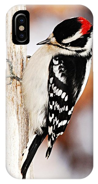 Male Downy Woodpecker 3 IPhone Case