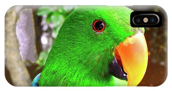 Male Eclectus Parrot II IPhone Case