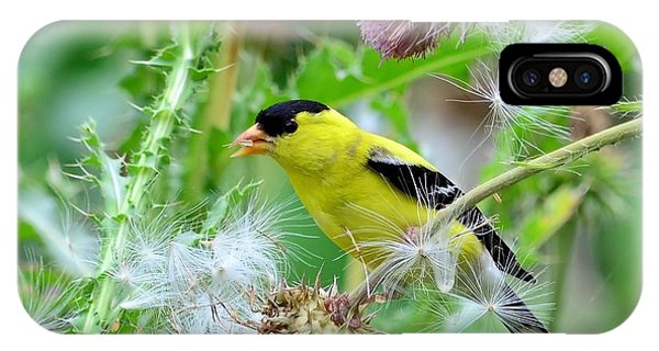 Male Goldfinch IPhone Case