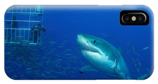 Ichthyology iPhone Case - Male Great White Shark And Divers by Todd Winner