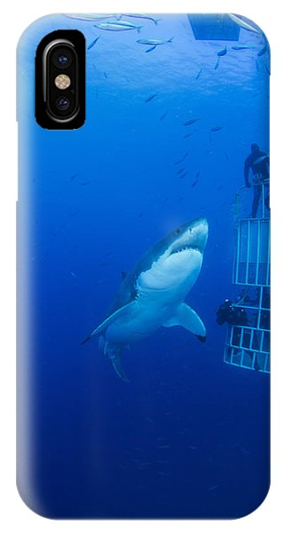 Male Great White With Cage, Guadalupe IPhone Case