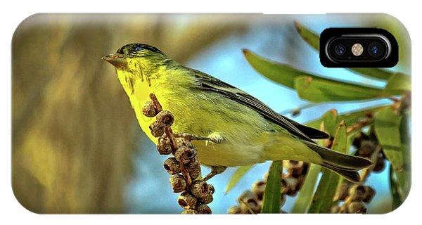 Male  Lesser Goldfinch IPhone Case
