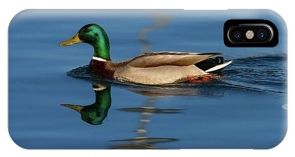 Male Mallard Or Wild Duck, Anas Platyrhynchos, Portrait IPhone Case