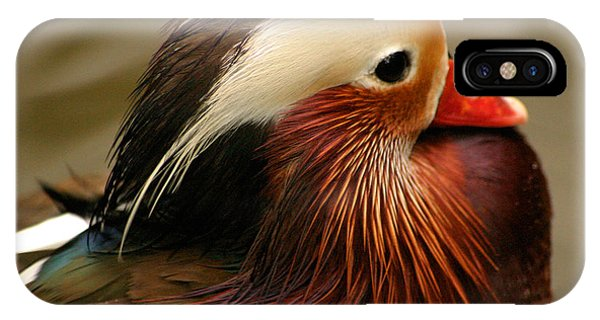 Male Mandarin Duck China IPhone Case