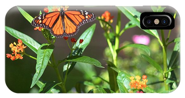 Male Monarch Butterflies IPhone Case