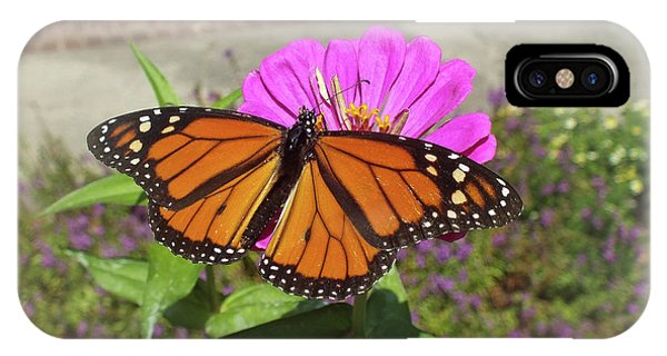 Male Monarch  IPhone Case