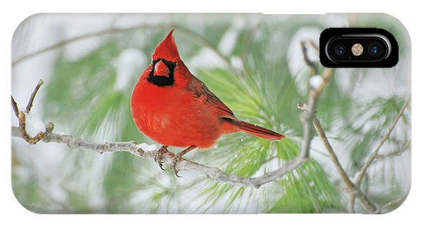 Male Northern Cardinal In Winter IPhone Case