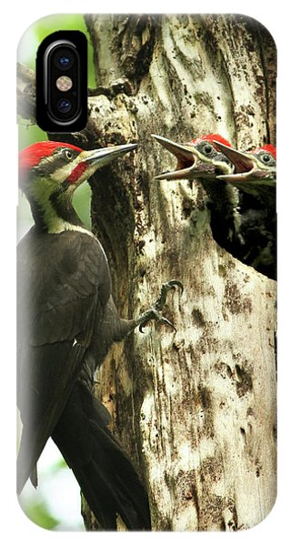 Male Pileated Woodpecker At Nest IPhone Case