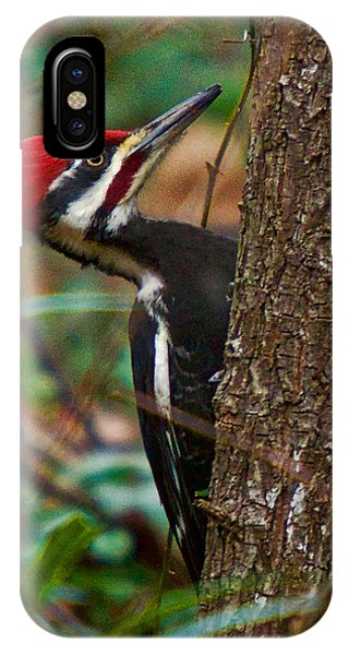 Male Pileated Woodpecker IPhone Case