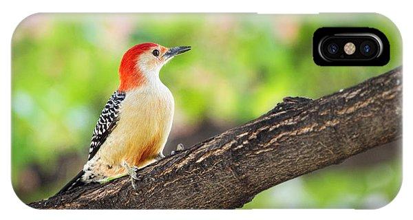 Male Red-bellied Woodpecker IPhone Case