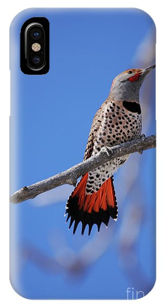 Male Red Shafted Northern Flicker IPhone Case