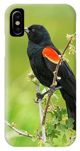 Male Red-winged Blackbird IPhone Case