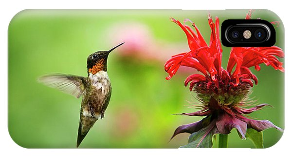Humming Bird iPhone Case - Male Ruby-throated Hummingbird Hovering Near Flowers by Christina Rollo