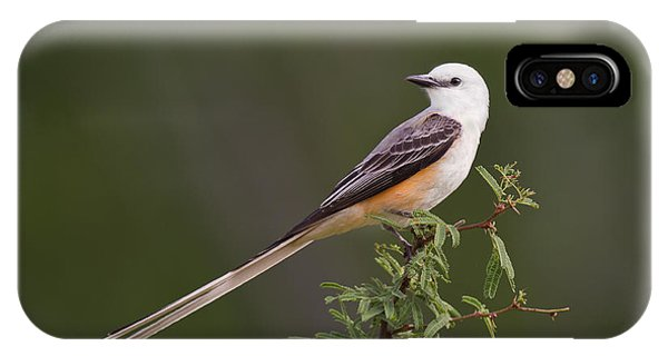 IPhone Case featuring the photograph Male Scissor-tail Flycatcher Tyrannus Forficatus Wild Texas by Dave Welling
