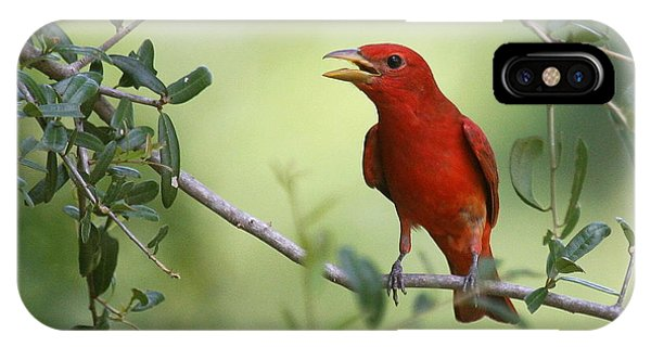 Male Summer Tanager IPhone Case