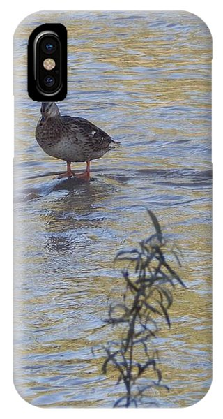 Mallard And The Branch IPhone Case