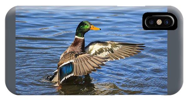 Mallard Drake In The Water IPhone Case