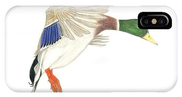 Mallard Drake IPhone Case