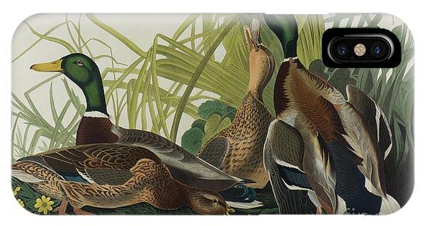 Mallard iPhone Case - Mallard Duck, 1834  by John James Audubon