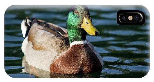 Mallard iPhone Case - Mallard Duck In Pond by Dustin K Ryan