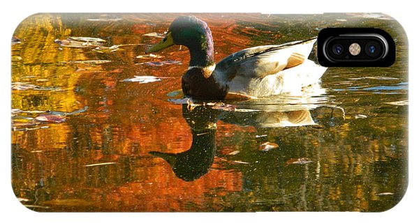 Mallard Duck In The Fall IPhone Case