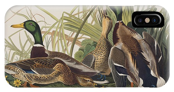 Mallard iPhone Case - Mallard Duck by John James Audubon