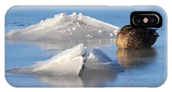 Mallard Duck Mount Sinai New York IPhone Case