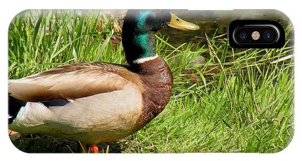 Mallard Duck Phone Case by Rosalie Scanlon