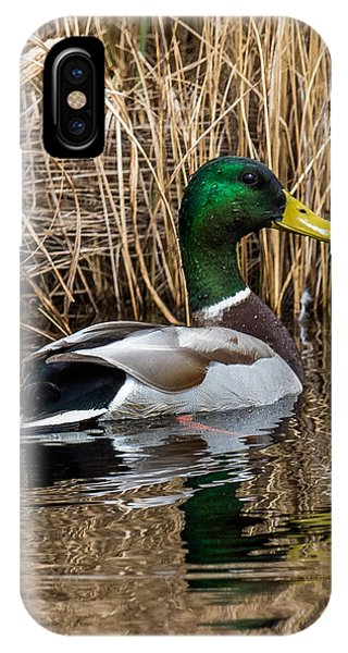 Mallard II IPhone Case
