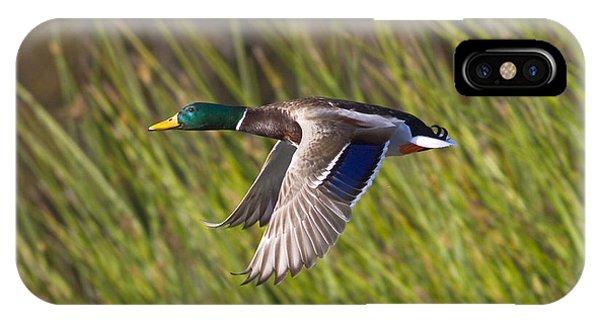 Mallard In Flight IPhone Case
